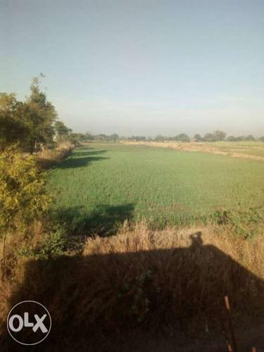 1 36 acre agricultural land, The plot is road for Sale in Chikodi