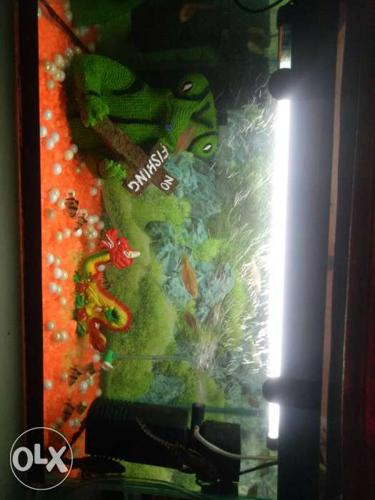 Aquarium of 2 feet. Fully set with fishes. Have