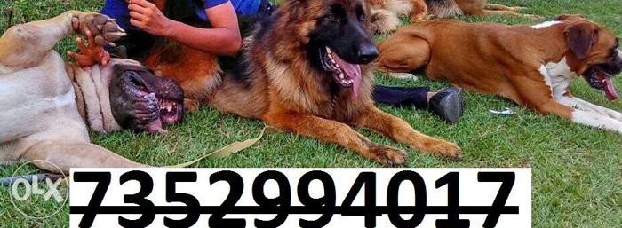 Best dogs pups in raj pets shop in jamshedpur jharkhand