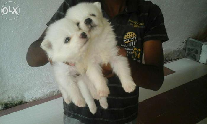 Chennai Pet Shop For Sale In Cuddapah Andhra Pradesh Classified