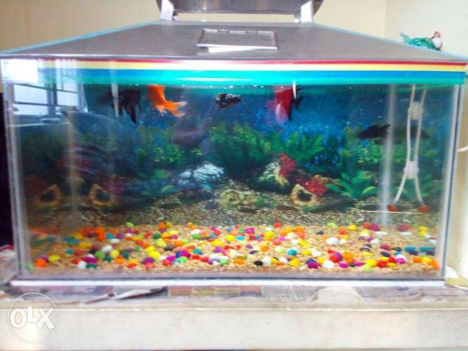 Clear Glass Fish Tank