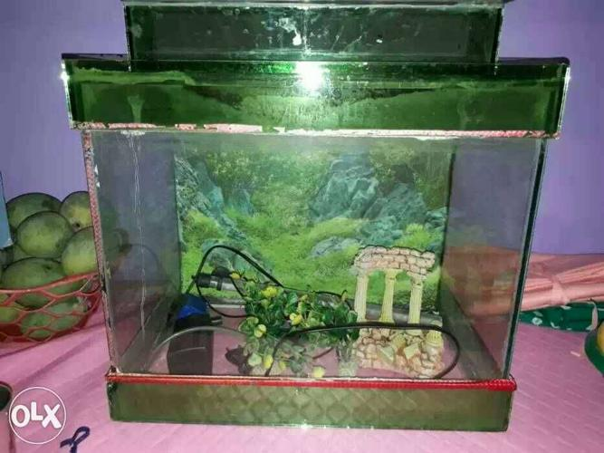 Fish equream good condition and with filtet led