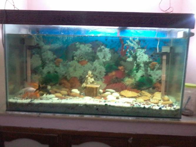 fish tank for sale aquarium fish for sale philippines 2017 fish tank