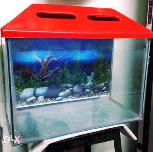 Fish Tank With Top And Poster