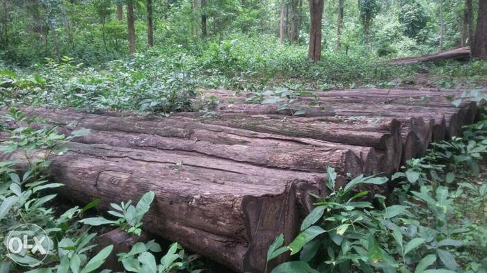 Forest Teak Timbers