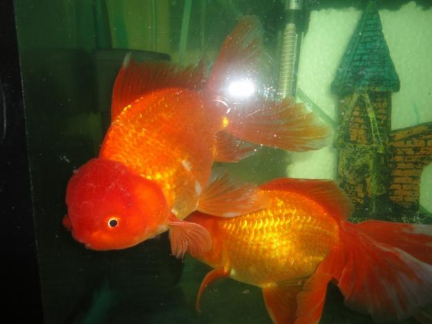 Goldfish fish food plants for sale in ajmer rajasthan for Fish meal for sale