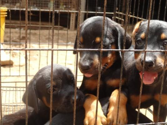 Pets Corner Thanjai, Thanjavur