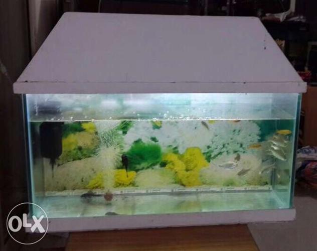 Rectangular White wooden Framed Fish Tank 3 ft