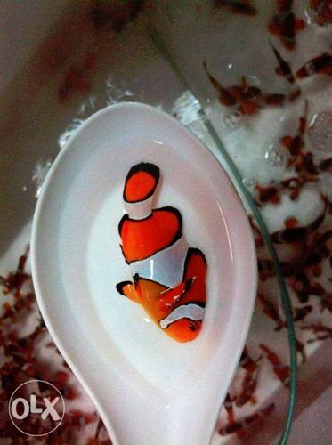 Top Quality 100% Imported Marine Fish Largest Supplies