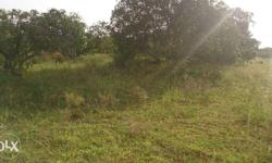 2 acers 15 Gunta (total 95 guntas) agricultural land with mango trees for sale. Land is located 500 meters from National Highway - Srinivaspura to Mulbagal/Tirupathi road. 8 Kms from Srinivaspura town. Complete Land is having different varieties of mango