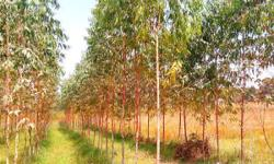190 Bigah Agriculture Land Near NH 72 A in Biharigarh Price 1.60 lakh Rs. per Bigah. Land is near National Highway and at a very attractive location. Basics amenities available. 230 Bigah Agriculture land in Tehsil Behat 4km away from NH 72A and land