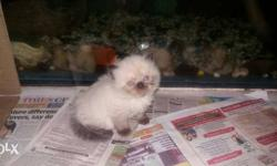 1 month old litter trained Healthy n very playful male