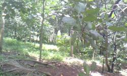 25 cents of land is for sale in Karuvelil. between St