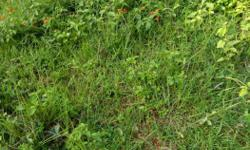 Gen Plot for sell at , near pakka kuwa ranchi