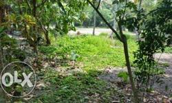 33 cent land and non active paddy field for sale in