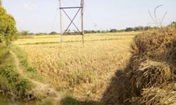 Agriculture Land for sale in Thirukkannamangai