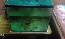 Aquarium all accessories and 5 fishs for sale