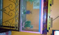Aquarium with stand & machine for sale 7 month old if