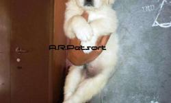 �We have Outstanding Golden Retriever pups available.