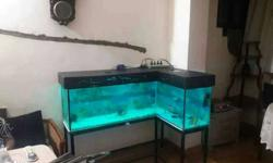 Clear Glass Fish Tank