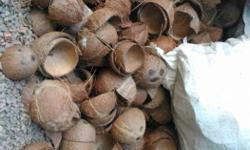 coconut shell. more than 6000 coconuy
