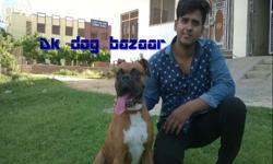 We have all dog breed n we believe in quality...