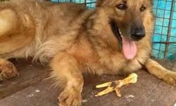 dog . 1. 5Years old female contact