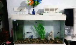 Fish Tank With White Plastic Frame