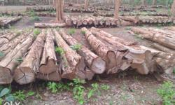 Dealers in: All kinds of Nilambur forest Teak timbers,
