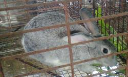 Fast time Brolier rabbit farm in krishnagar