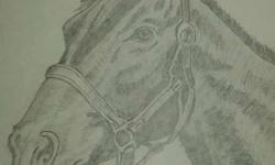 Horse With Leash Sketch