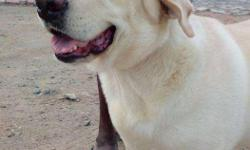 dog for sale for sale in Tamil Nadu Classifieds & Buy and