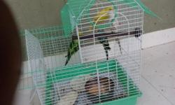 Hi All,I want to sell my 4 Love birds with cage. Photos