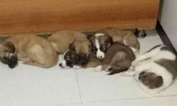 i want to sell my puppies in 2000 rs. per puppy cost