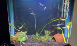 Imported Fish Tank 20 ltrs capacity with Lighting,