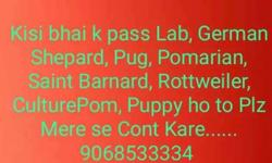 Kisi Bhai K Pass Lab Text