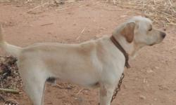lab male available for matting in Tirupur