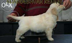 Vet.checked labrador pupps avails.. A perfect point for
