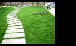 We are manufacturing & Suppling Mexican lawn a very