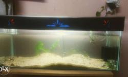 Planted, Easy to maintain aquarium for sale...l*b*h =