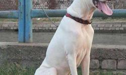 �Puppykennel�����Best Class quality pure��{ Pakistani