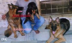 all kinds of dog's puppies are available for sale in