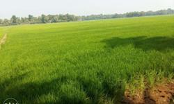 Dear All, We would like to sell 2 acrs of paddy field