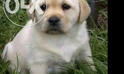 Pets and animals for sale in Tirunelveli, Tamil Nadu - Puppy