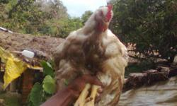 wellcome to all world poultry farm srikantfeedstore.the