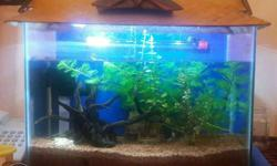 Tank with tank top and strip light. plants, substrates,