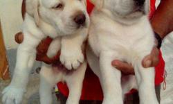 Hi Pet Lovers Of India ... : Ms. Anamica Mallick & Co.