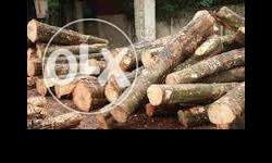 Wanted rubber wood and trees in kannur and kasaragod