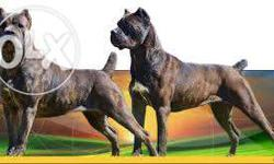 We offers all Pet quality and show quality breeds of